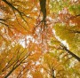 Autumn in the Beech Forest SpessartHerbst Germania (fonte Greenpeace)