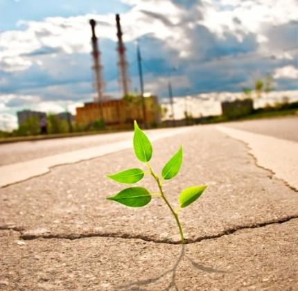 Ambiente Italia 2013, oltre la crisi c'è la green economy