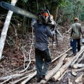 L'Italia finanzia la deforestazione illegale-