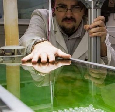 algoroute-un-bitume-vegetal-a-base-de-micro-algues