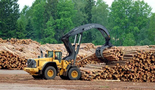 10 Paesi in cui la deforestazione è fuori controllo -