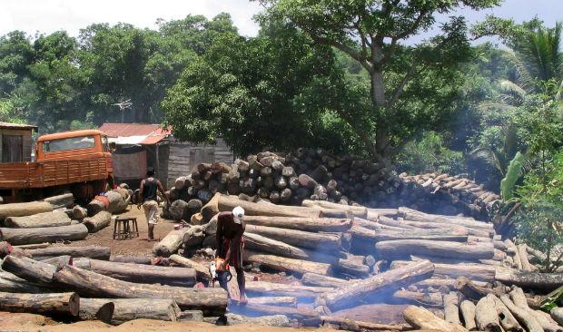 10 Paesi in cui la deforestazione è fuori controllo 1