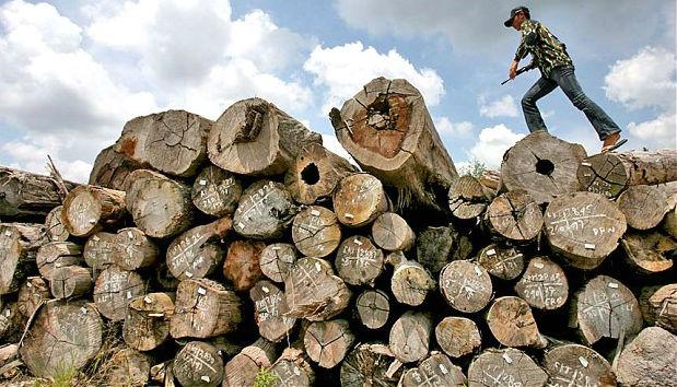 10 Paesi in cui la deforestazione è fuori controllo 2