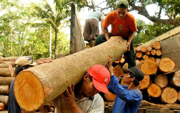10 Paesi in cui la deforestazione è fuori controllo 3