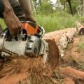 10 Paesi in cui la deforestazione è fuori controllo 4