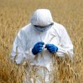 L'Italia vieterà 8 OGM già autorizzati in Europa