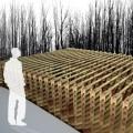 Bamboo per ricostruire Haiti, AA di Londra e Quisqueya sono al lavoro