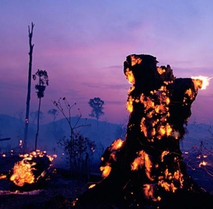 Brasile in fiamme, ma il governo legalizzerà la deforestazione 4