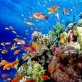 El Niño ucciderà la barriera corallina entro fine mese 4