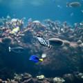 Così il riscaldamento globale soffocherà la vita marina 3