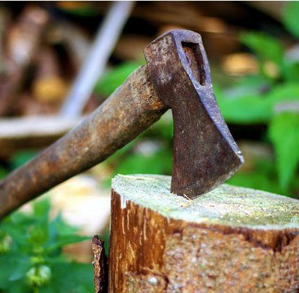 Deforestazione di Bialowieza: per l'UE è illegale