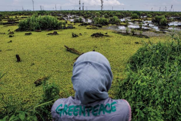 Deforestazione, Greenpeace inchioda i big dell'olio di palma