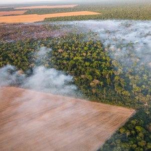 La deforestazione ha un'eredità nascosta e devastante