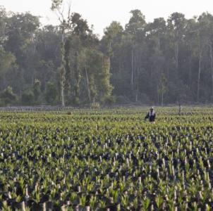 Indonesia, i big dell'olio di palma fanno cartello