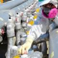 Fukushima, il muro di ghiaccio si è fuso al primo tifone
