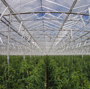 Sundrop-Farms-Greenhouse