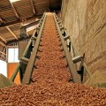 Biomasse: il Friuli le incentiva, il Veneto le norma