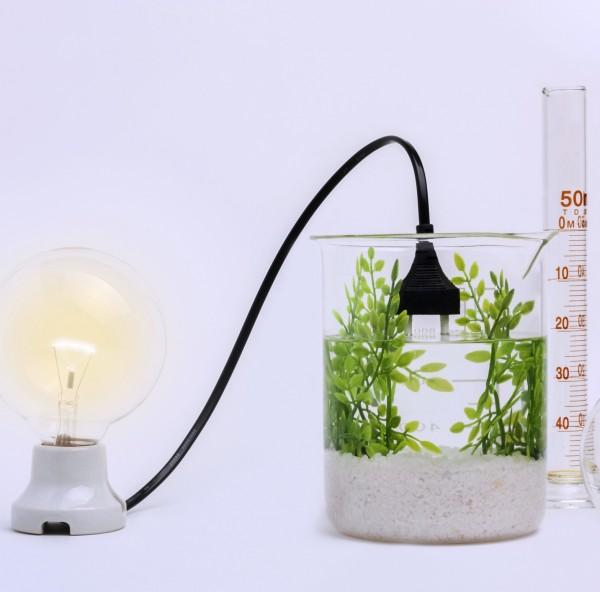 Come mettere a frutto le bioenergie: la guida Fao–Iea