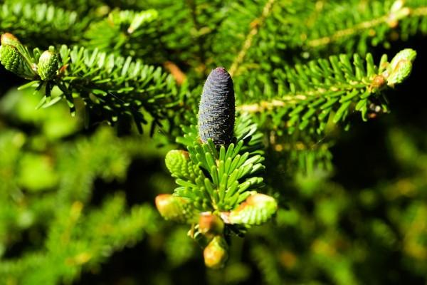 Scienziati UK producono bioplastica dagli alberi di Natale