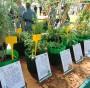 riconoscimento-piante-carabinieri-ambiente-difesa-forestale