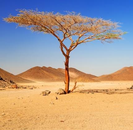 Un quarto del pianeta rischia l'aridificazione 5