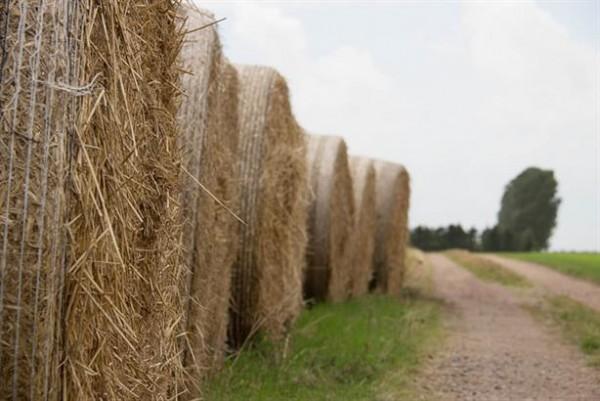Biometano da biomassa