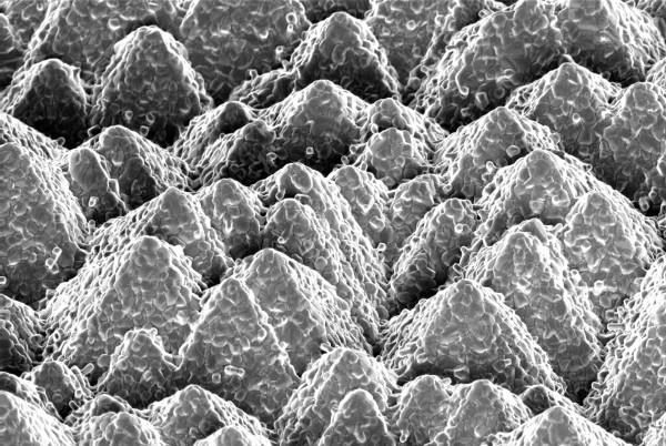 celle solari silicio perovskite