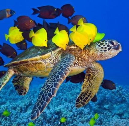 Buona Giornata mondiale degli Oceani