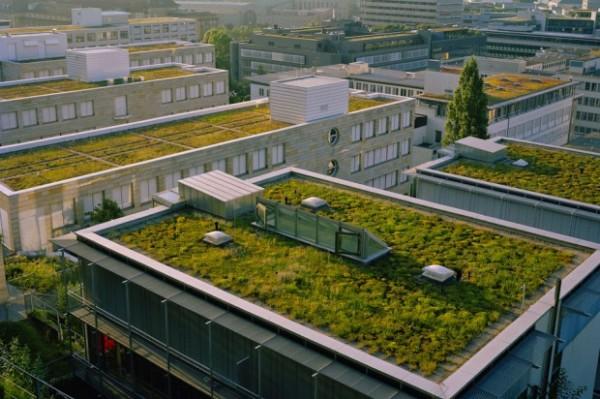 Così i tetti verdi riducono i pericoli delle bombe d'acqua