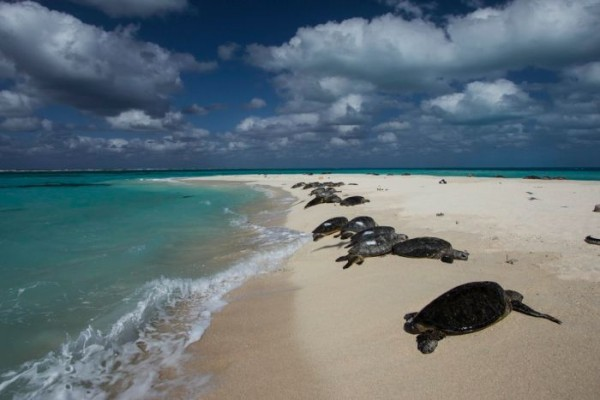 cambiamenti-climatici-east-island
