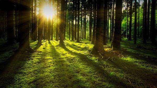 foreste-legambiente-festa-albero