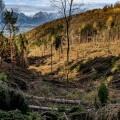 maltempo-alberi-alpi