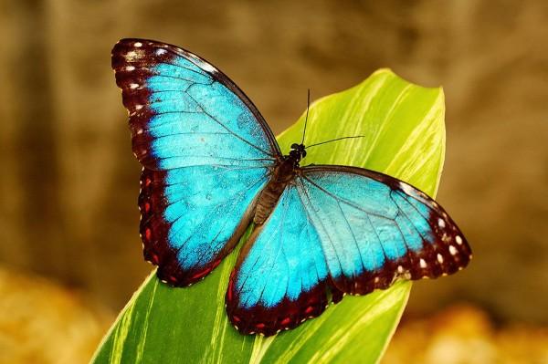 santuario-delle-farfalle-messico