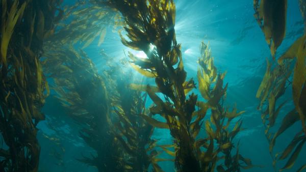 Biopolimeri dalle alghe