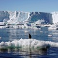 Antartide, i ghiacciai si sciolgono a velocità mai osservate prima