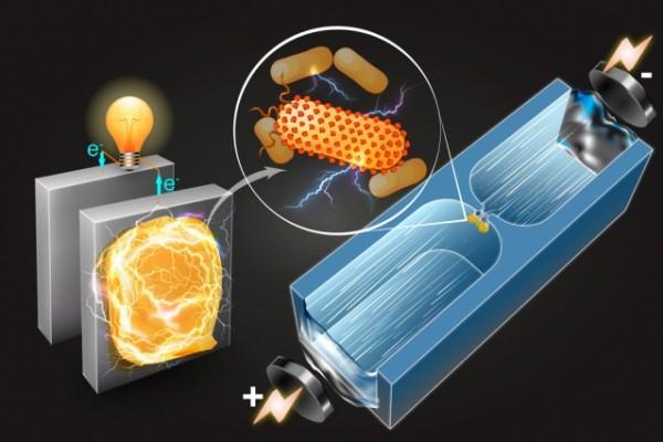 Centrali elettriche microbiche