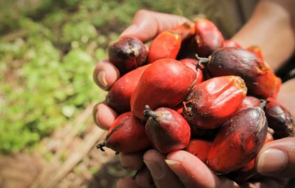 idustria olio di palma