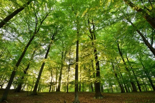 alberi piante suolo terreno co2
