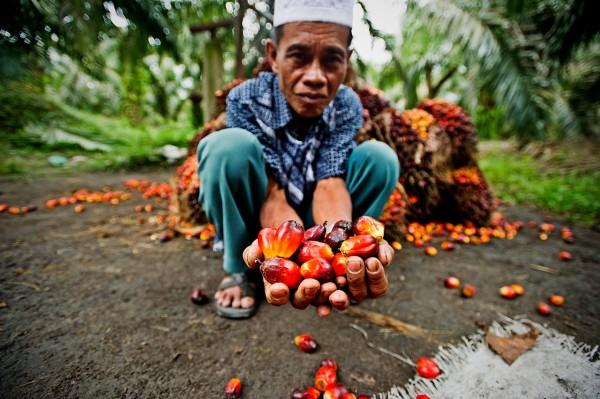 olio di palma direttiva europea