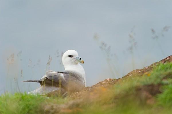 plastica uccelli artico