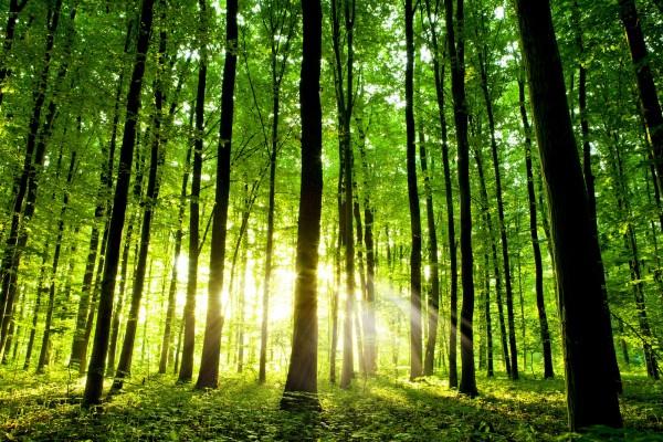 foreste boreali cambiamento climatico