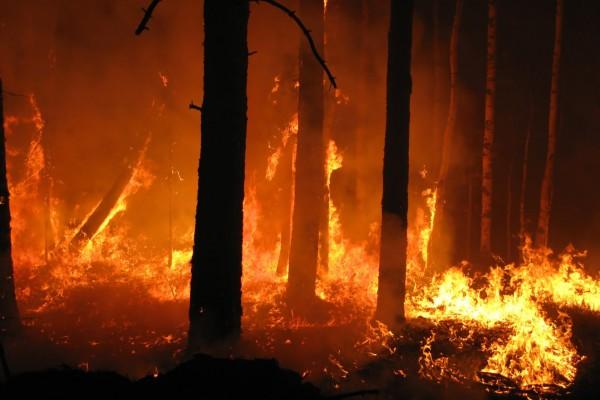 eventi estremi-incendi-australia