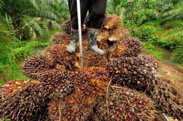 olio di palma biodiesel