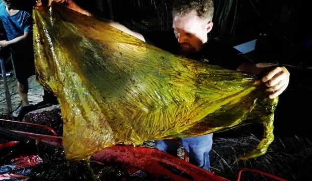 Filippine, morta balena: aveva 40 chili di plastica nello stomaco