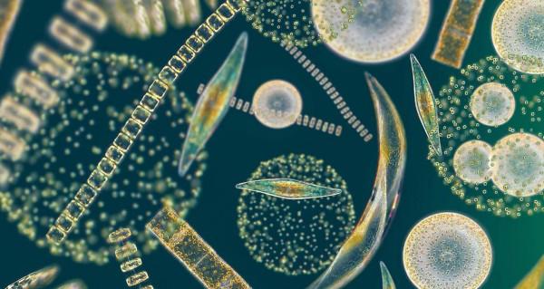 alghe marine fotovoltaico