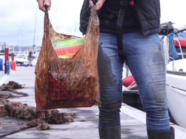 buste biodegradabili mare