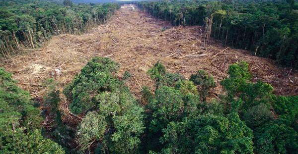 foreste tropicali 2018