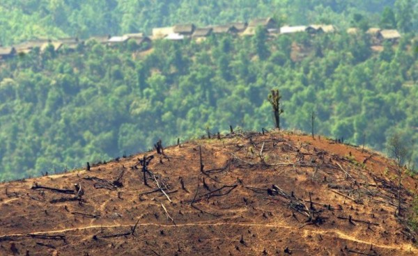 importazioni alimentari deforestazione