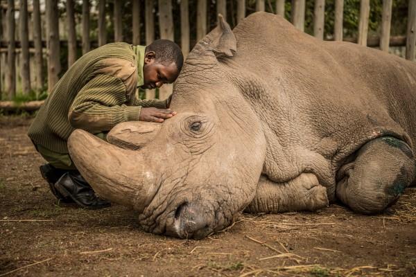 specie animali estinzione