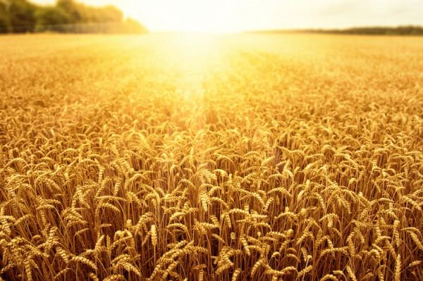 intesa sanpaolo agroenergie